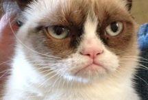 Grumpy Cat <3
