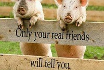 Pigs (My Pet One Day)