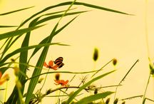 Imagens nature