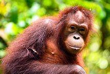 Borneo + Malaysia / Borneo Island + Malaysia Country + Sabah State