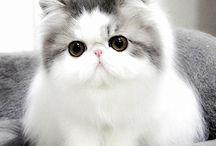 """Oh So Cute ("""",)"""