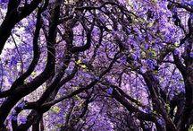 CHRIS & TESS: NARACOORTE AUSTRALIA