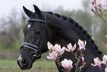 Horses=My life / by Toni Scheel