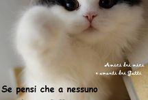 Amici dei mici e amanti dei Gatti / Pagina facebook favolosa