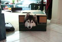 happy pets;;a catlike dog