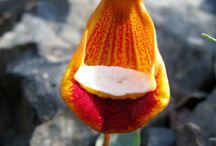 Knasiga blommor / Blommor med skön annorlunda form