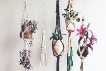 Pflanzen & Deko