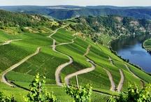 Dolina Mozeli