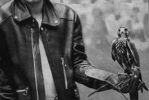 Falcos, Eagles, Hawks...