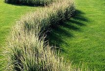 Gardening: Curve line ideas