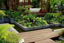 Yard or garden ideas / by Ruth Little