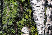 Texture of a Tree
