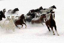 Amazing Animals / by J&R Živković
