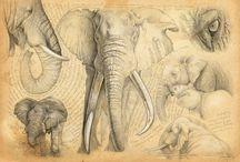 Character Animal Design