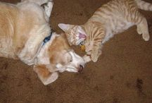 Pets that I have or want / by Leslie Phillips