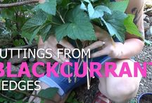 All about backyards berries