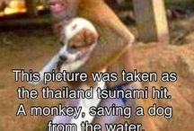 ANIMALS!!... because just!