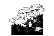 Cultivated Mushrooms / Images of growing mushrooms and cultivated mushrooms from around the world
