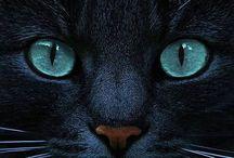 Gorgeous felines