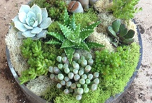 Wonderful World of Succulents