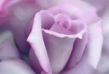 Flowers / by jan Rockas