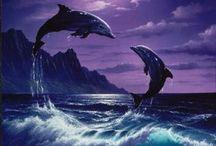 dolphins / by Jenna O'Daniel Harrison
