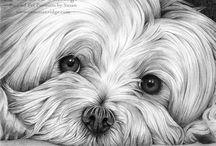 Arte del perro