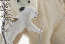 polar bears and other cuties...