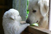 Animais que adoro