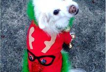 Ugly Christmas dog sweaters