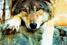 Wolves *-*