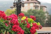 Why We LOVE Colorado Springs!