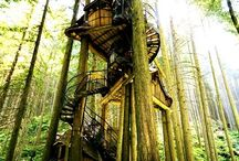 house in the forest & tree house
