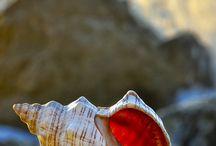 Shells Closeup