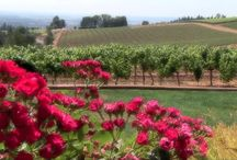Event Venues: Chehalem Valley Oregon / Welcome to Oregon Wine Country! Let us help you plan your Willamette Valley Oregon group event at our Chehalem Valley Visitor's Center in Newberg: 115 North College Street, Newberg, OR 97132 503.538.2014 chehalemvalley.org