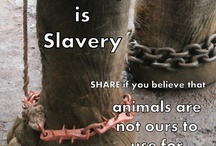 Protect our animals