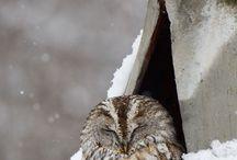 Because owls.