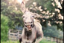 I need a donkey, stat