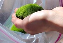 Growing mosses