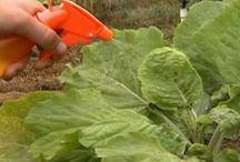 salvar plantas