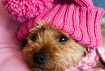 Puppy Dogs / by Julie Walker-Farrow