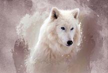Animals * White Wolf