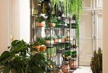 Plantes deco intérieur