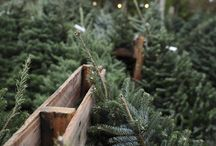 Christmas Tree Farm Winter Engagement Photo Session