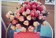 FLOWERS / beautiful flowers <3