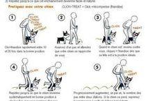 entraînement chiens