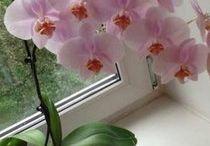 комнатные растени