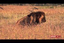 Kenya / by Jetset Extra