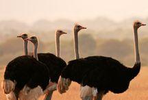 Africa Travel / Amazing pics from Africa. Landscapes, people, culture and beautiful places to visit in Africa.  Fotografii impresionante din Africa. Peisaje, oameni, cultură și locuri frumoase de vizitat în Africa.  www.haisitu.ro