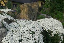grădină.....